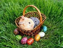 在绿草的复活节兔子鸡蛋 免版税库存图片