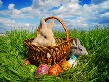 在绿草的复活节兔子鸡蛋 库存照片