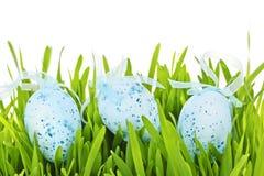 在绿草的复活节彩蛋 库存图片