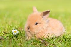 在绿草的小兔子 库存图片