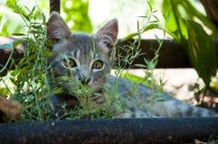 在绿草的小猫 库存图片