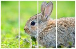 在绿草的小的兔子在夏日 图库摄影