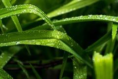 在绿草的小透明下落 免版税库存照片