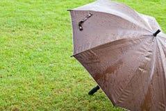 在绿草的布朗伞 免版税图库摄影