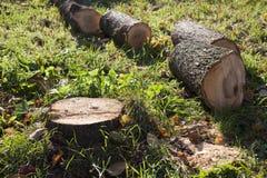 在绿草的布朗树桩 库存图片