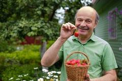 在绿草的成熟红色草莓 库存图片