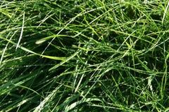 在绿草的抽象自然本底 免版税库存图片