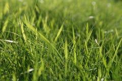 在绿草的抽象自然本底 库存图片