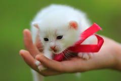 在绿草的新出生的白色小猫 免版税库存照片