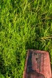 在绿草的木小船 免版税库存照片