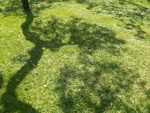 在绿草的树阴影 免版税图库摄影