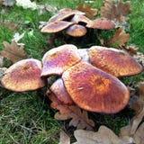 在绿草的森林蘑菇 图库摄影