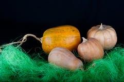 在绿草的橙色和米黄南瓜 免版税图库摄影