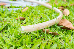 在绿草的橡皮泳圈 免版税图库摄影
