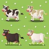 在绿草的母牛 库存例证