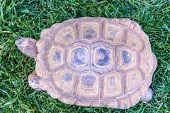 在绿草的点心草龟 库存图片