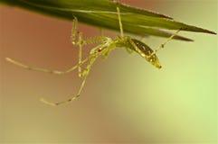 在绿草的猎蝽 免版税图库摄影