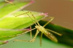在绿草的猎蝽 库存图片