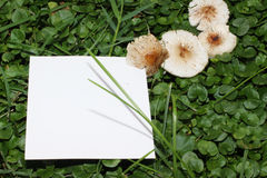 在绿草的白色卡片用蘑菇 免版税库存图片