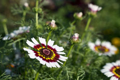 在绿草的白花 免版税图库摄影