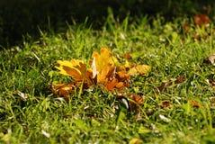 在绿草的秋天黄色橡子叶子 库存照片