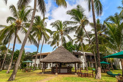 在绿草的空的sunbeds在棕榈树中 免版税库存照片
