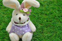 在绿草的穿戴的复活节兔子 免版税库存图片
