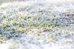 在绿草的第一雪 库存照片