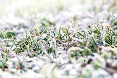 在绿草的第一雪 免版税库存照片