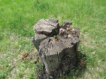 在绿草的老树桩 免版税库存照片