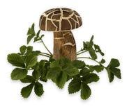 在绿草的蘑菇 库存照片