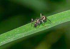 在绿草的蚂蚁 库存图片