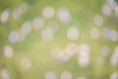 在绿草的迷离紫罗兰色花 图库摄影