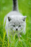 在绿草的逗人喜爱的小猫 库存图片