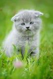 在绿草的逗人喜爱的小猫 免版税图库摄影