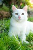 在绿草的逗人喜爱的猫 免版税库存图片