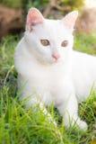 在绿草的逗人喜爱的猫 库存照片