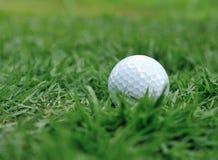 在绿草的高尔夫球 免版税库存图片