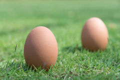 在绿草的鸡蛋 库存照片