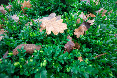 在绿草的黄色叶子 图库摄影