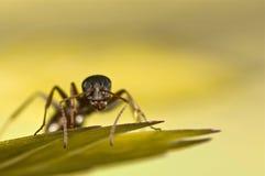 在绿草的黑蚂蚁 库存照片