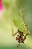 在绿草的黑蚂蚁 图库摄影