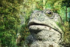 在绿草背景的巨型蟾蜍 看与一只眼睛 免版税图库摄影