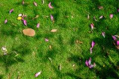 在绿草背景的瓣花 库存照片