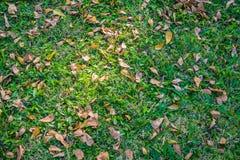 在绿草背景的秋天叶子 库存照片