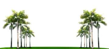 在绿草领域的棕榈树与白色空间 免版税库存照片