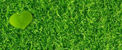 绿色Eco友好的横幅背景 免版税库存照片