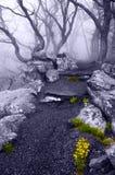 在贝蒂的岩石的浓雾和春天花在Shenan落后 免版税库存图片