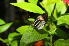 在蝴蝶世界的五颜六色的昆虫 免版税库存图片