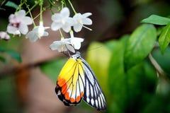 在蝴蝶的多颜色 库存图片